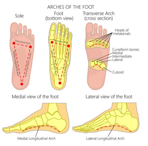 【Health Science Blog】Vol.16「足のアーチってあった方がいいの?何の役に立つの?」