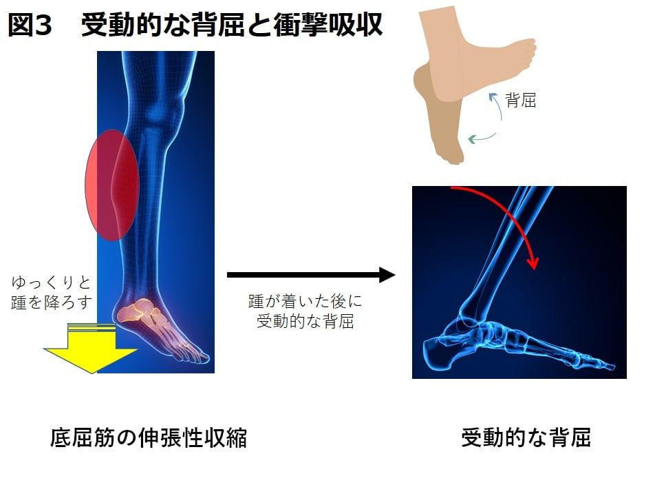 【Health Science Blog】Vol.19 「膝を壊さない着地の方法って何?前十字靭帯断裂を予防する。足首のメカニズム。」